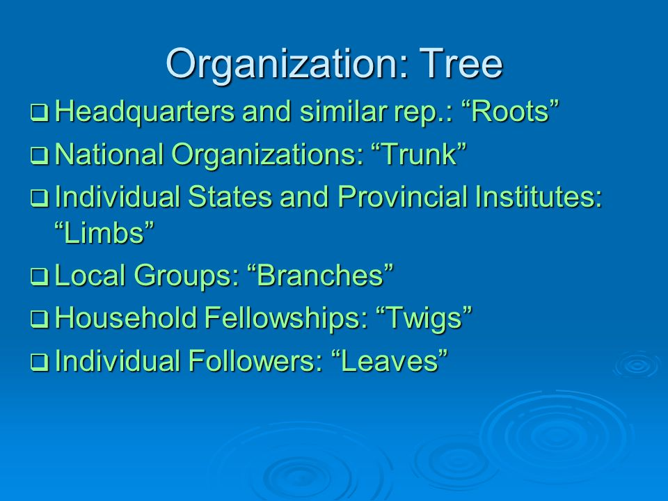 Organization: Tree Headquarters and similar rep.: Roots