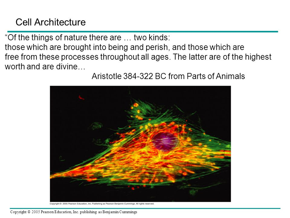 Cell Architecture Of the things of nature there are … two kinds: