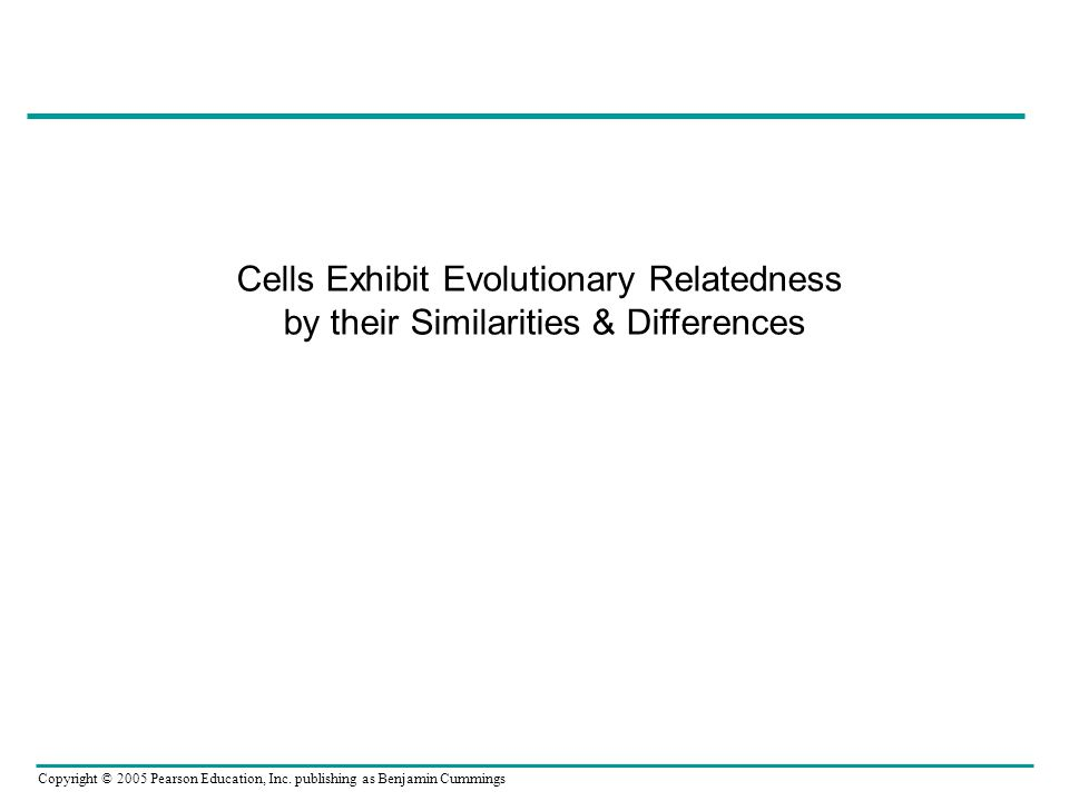 Cells Exhibit Evolutionary Relatedness