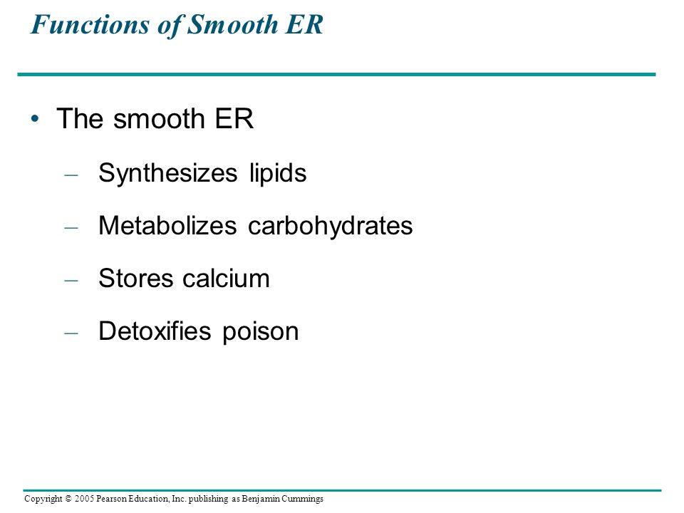 Functions of Smooth ER The smooth ER Synthesizes lipids