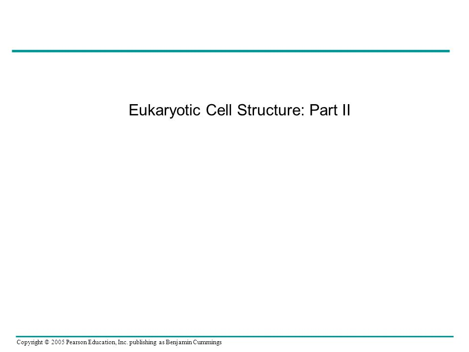 Eukaryotic Cell Structure: Part II