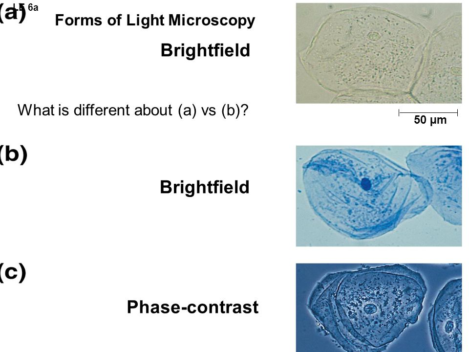 Forms of Light Microscopy