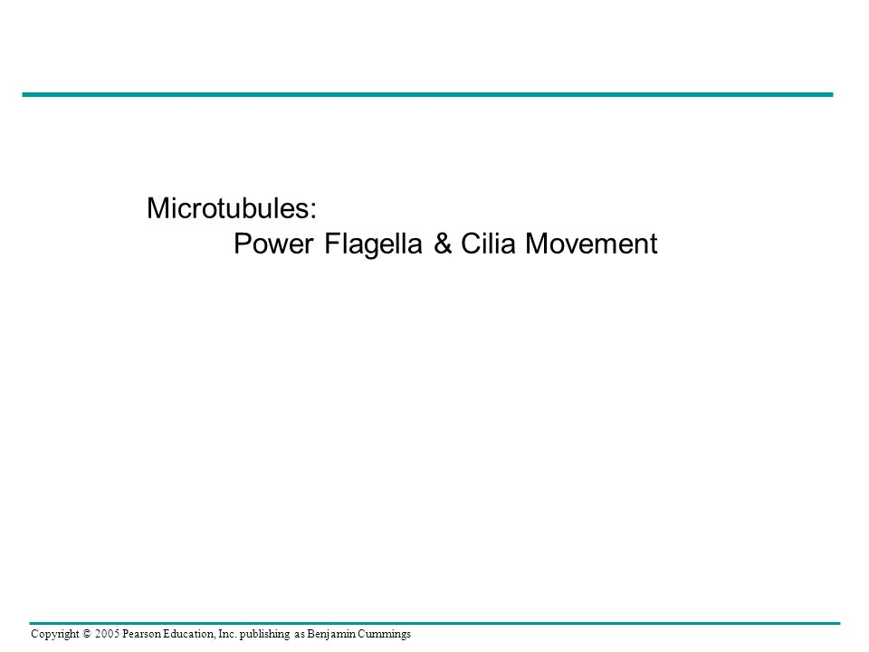 Microtubules: Power Flagella & Cilia Movement