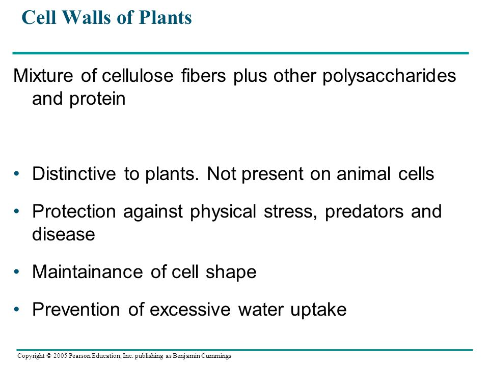 Cell Walls of Plants Mixture of cellulose fibers plus other polysaccharides and protein. Distinctive to plants. Not present on animal cells.