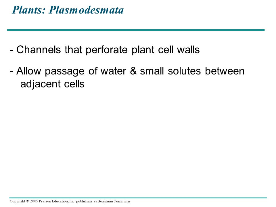 Plants: Plasmodesmata