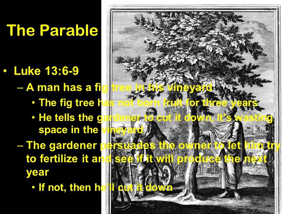 The Parable Luke 13:6-9 A man has a fig tree in his vineyard