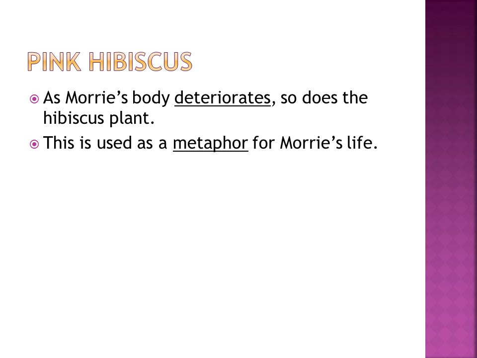 PINK HIBISCUS As Morrie's body deteriorates, so does the hibiscus plant.