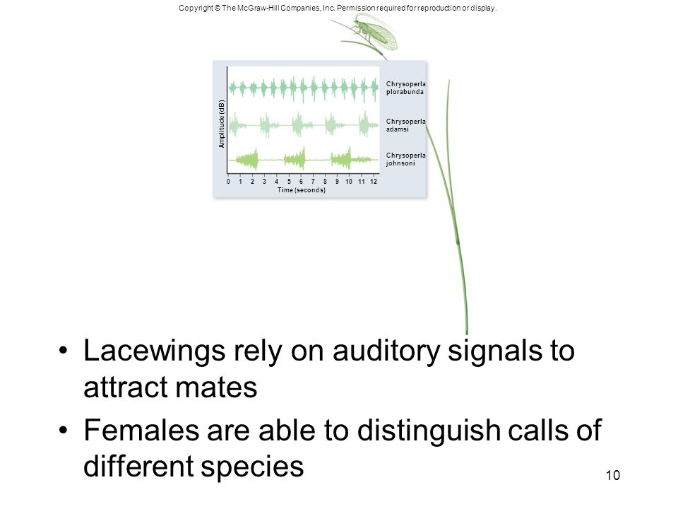 Lacewings rely on auditory signals to attract mates