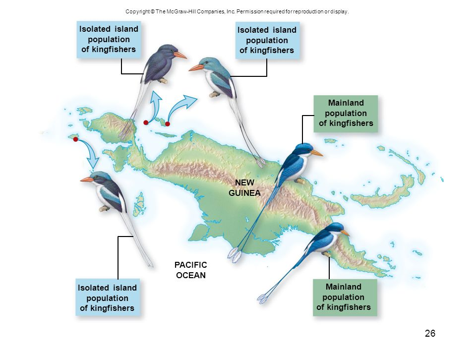 Isolated island Isolated island population population of kingfishers
