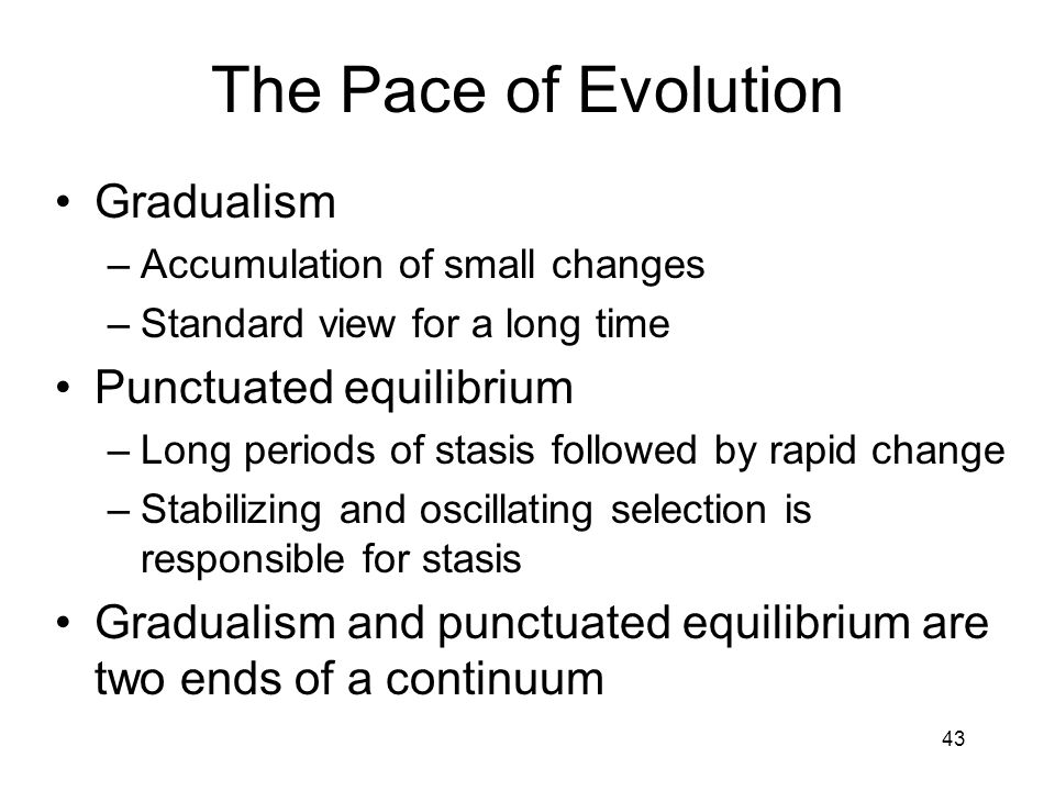 The Pace of Evolution Gradualism Punctuated equilibrium