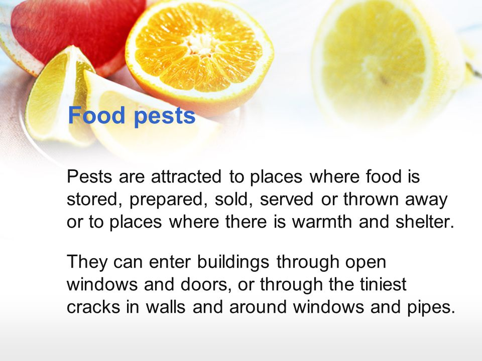 Food pests Pests are attracted to places where food is stored, prepared, sold, served or thrown away or to places where there is warmth and shelter.