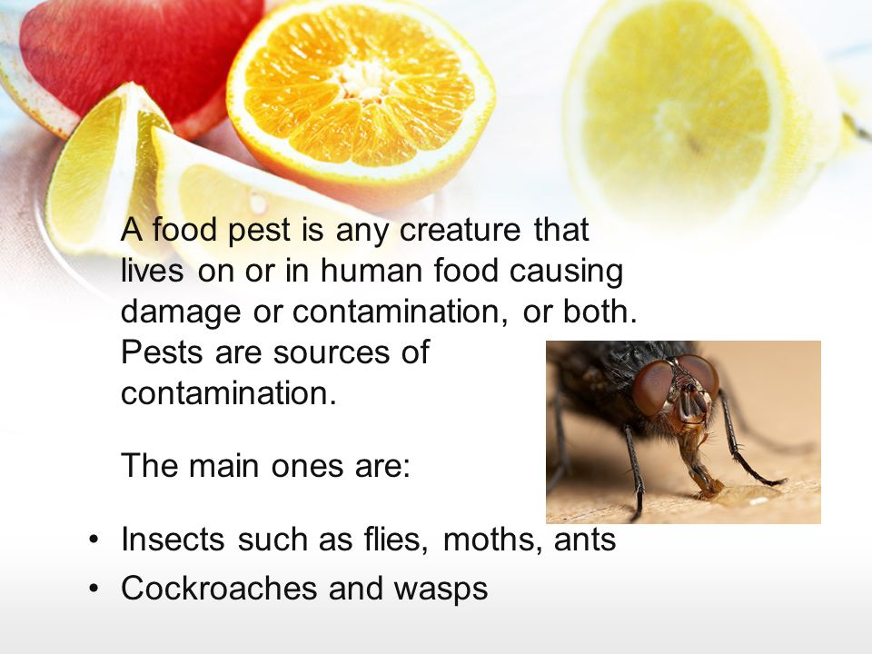 A food pest is any creature that lives on or in human food causing damage or contamination, or both. Pests are sources of contamination.