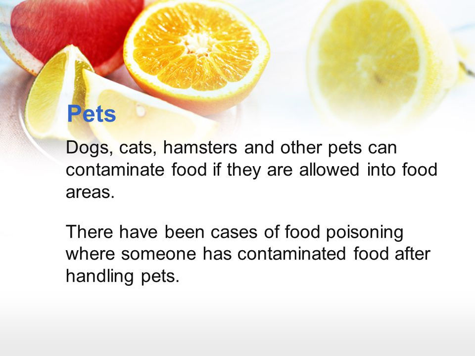 Pets Dogs, cats, hamsters and other pets can contaminate food if they are allowed into food areas.