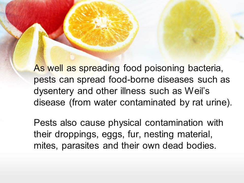 As well as spreading food poisoning bacteria, pests can spread food-borne diseases such as dysentery and other illness such as Weil's disease (from water contaminated by rat urine).