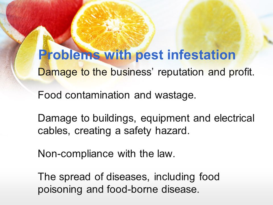 Problems with pest infestation