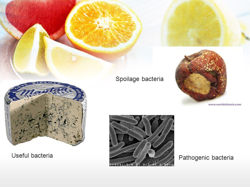 Spoilage bacteria Useful bacteria Pathogenic bacteria
