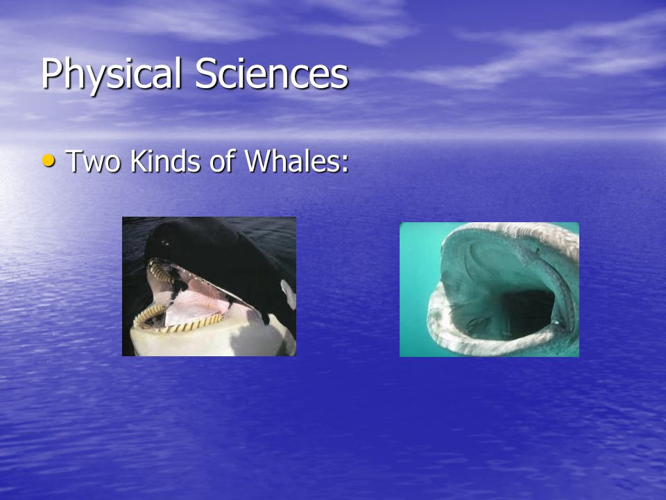 Physical Sciences Two Kinds of Whales: