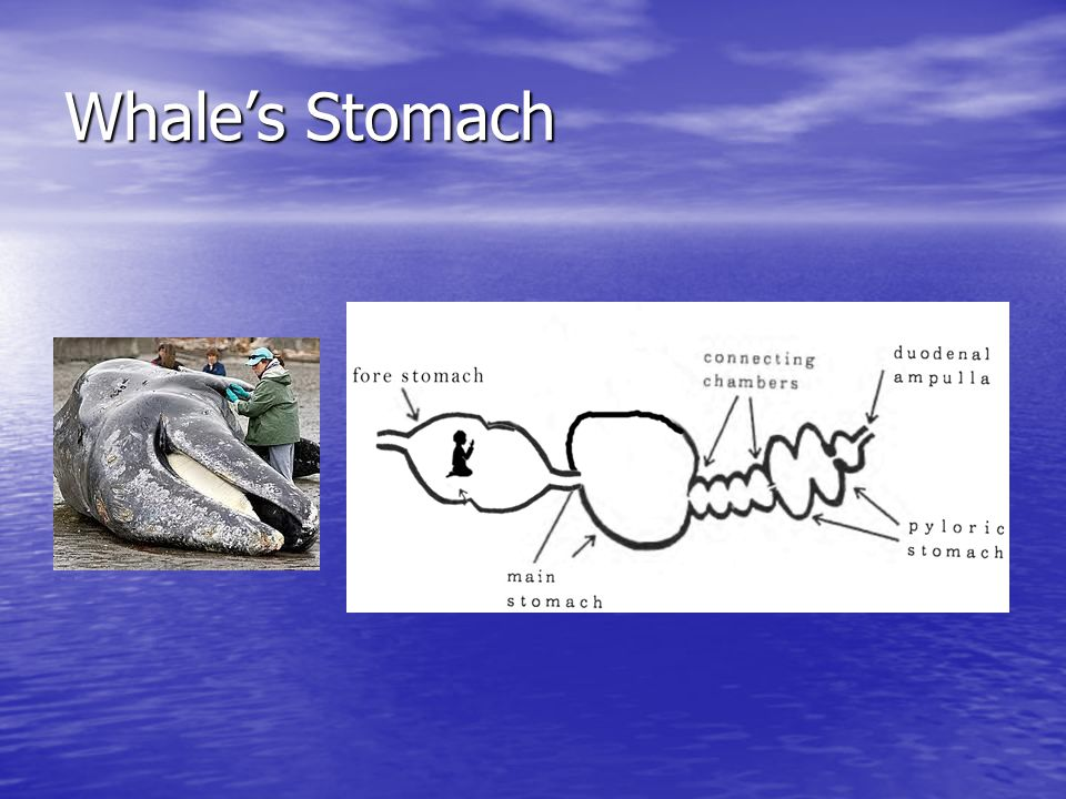 Whale's Stomach