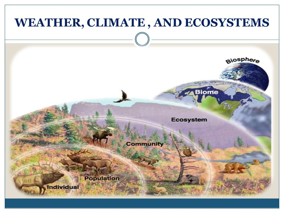 WEATHER, CLIMATE , AND ECOSYSTEMS