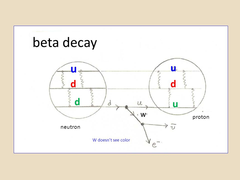 beta decay u u d d d u W- proton neutron W doesn't see color
