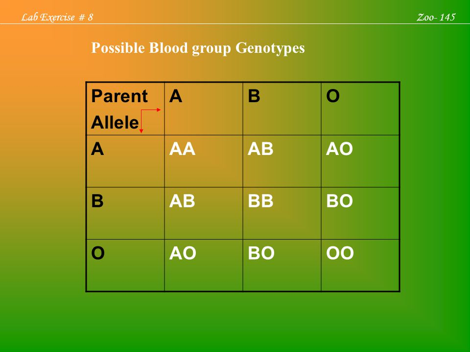 Parent Allele A B O AA AB AO BB BO OO Possible Blood group Genotypes
