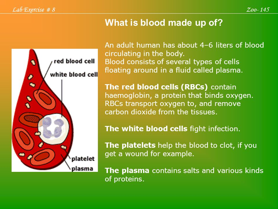 What is blood made up of Lab Exercise # 8 Zoo- 145