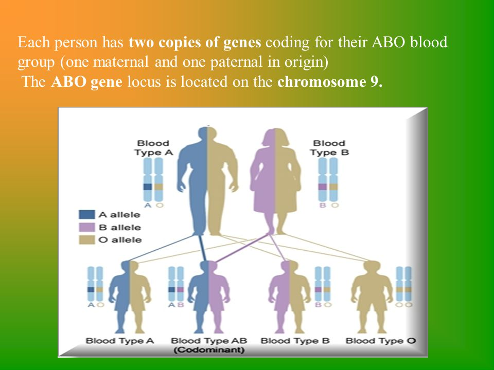 Each person has two copies of genes coding for their ABO blood group (one maternal and one paternal in origin)