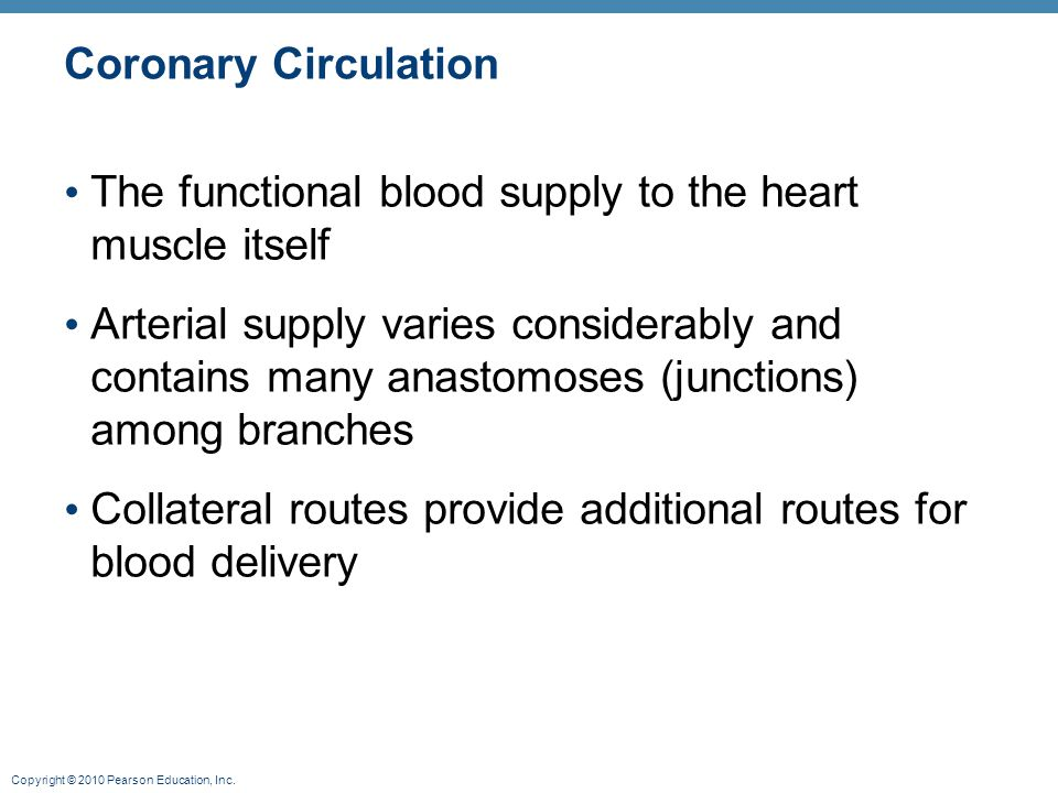 Coronary Circulation The functional blood supply to the heart muscle itself.
