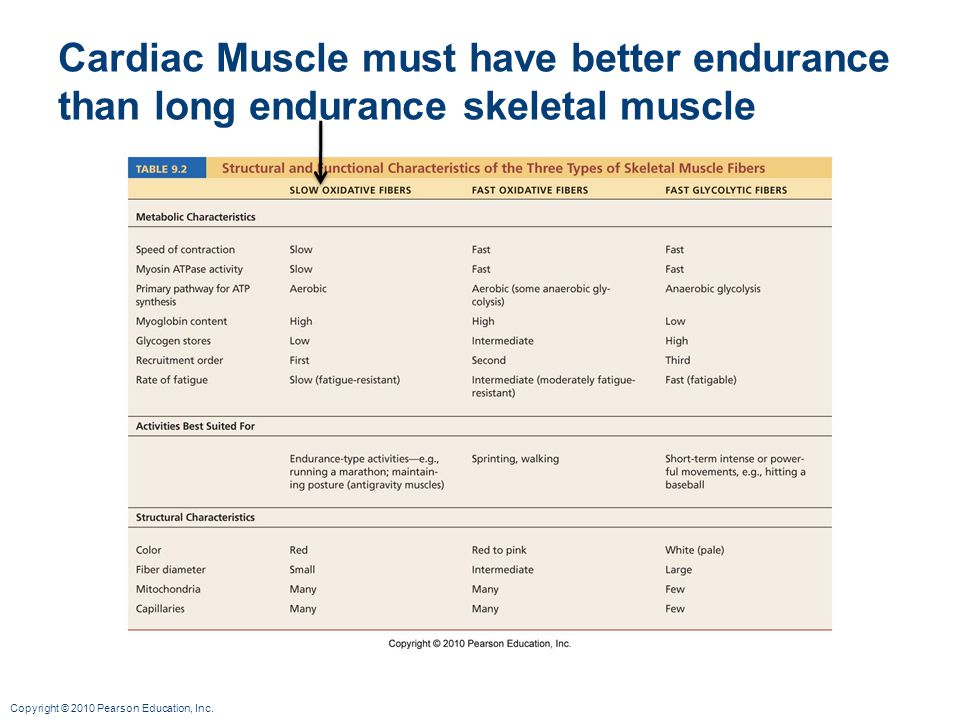 Cardiac Muscle must have better endurance than long endurance skeletal muscle