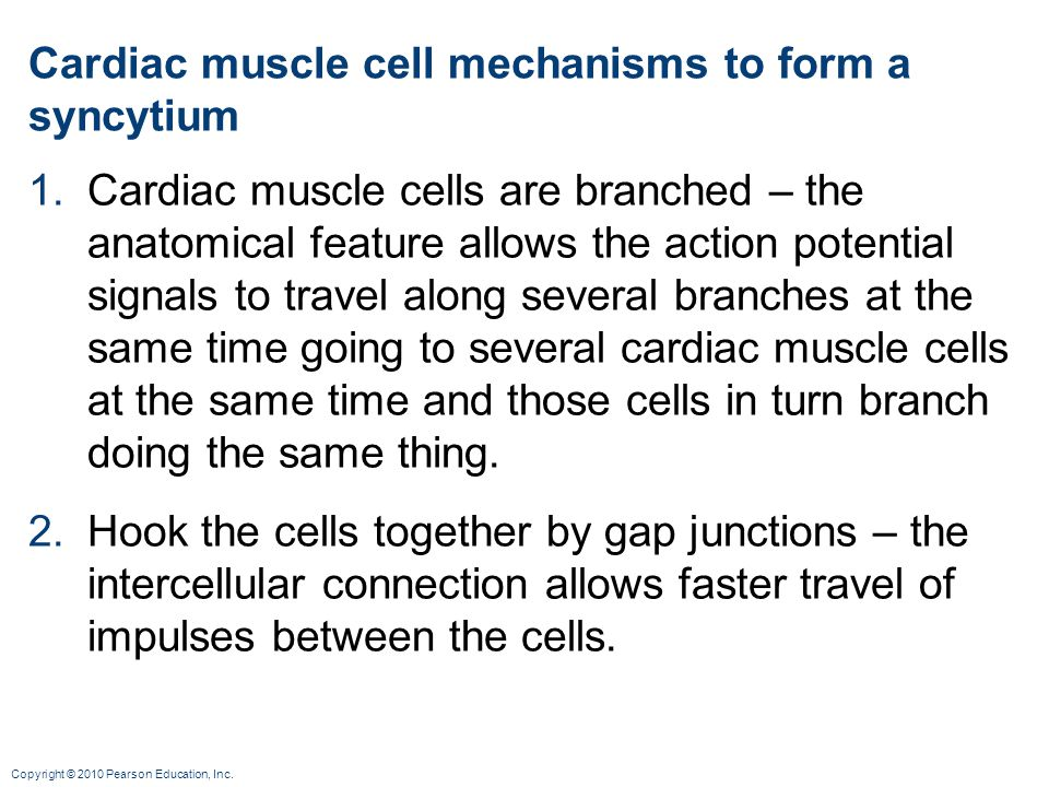 Cardiac muscle cell mechanisms to form a syncytium