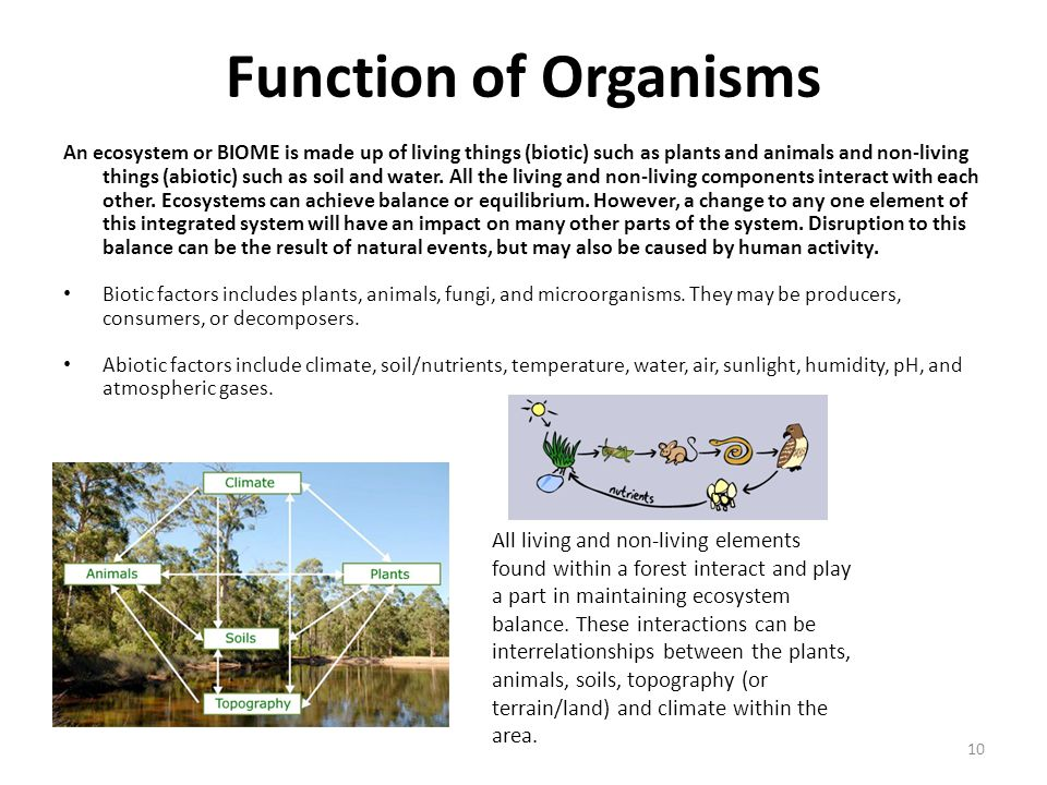 Function of Organisms