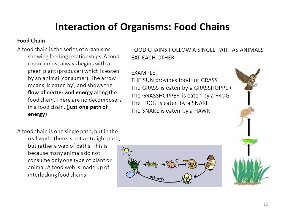 Interaction of Organisms: Food Chains