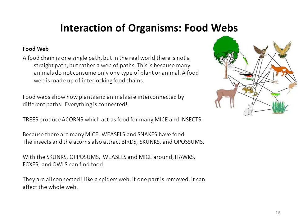 Interaction of Organisms: Food Webs