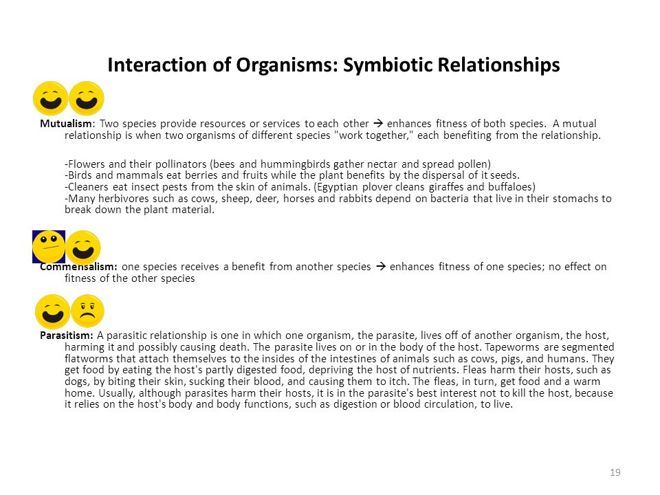 Interaction of Organisms: Symbiotic Relationships