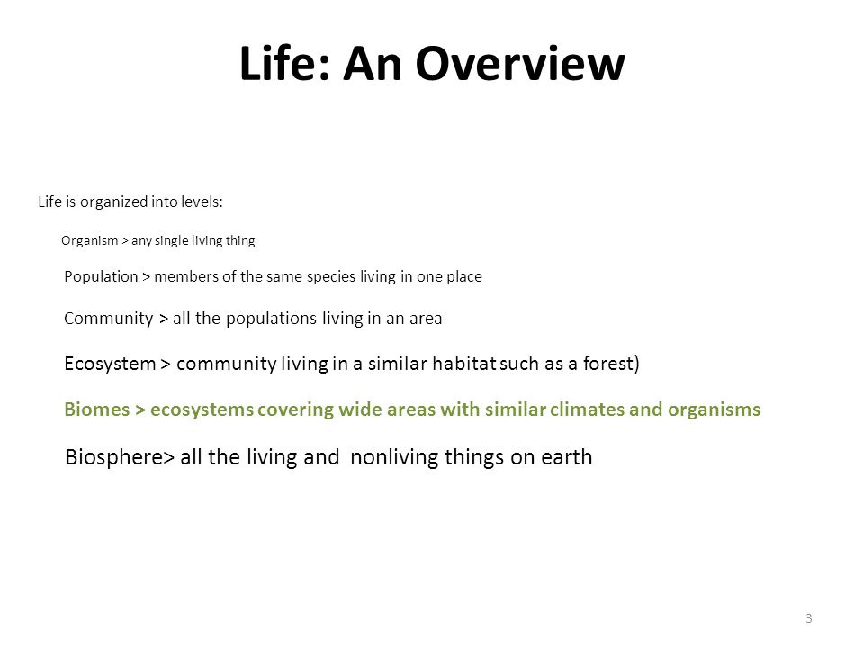 Life: An Overview Life is organized into levels: Organism > any single living thing.