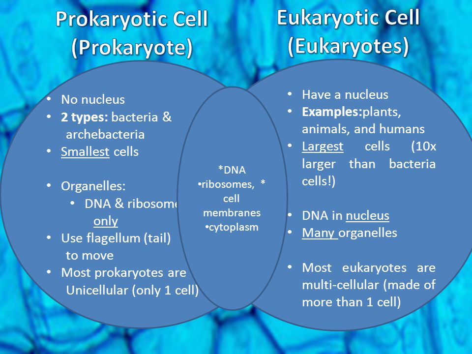 Prokaryotic Cell (Prokaryote)