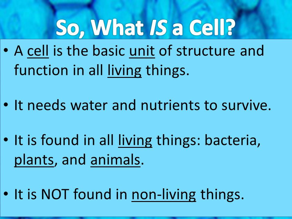 So, What IS a Cell A cell is the basic unit of structure and function in all living things. It needs water and nutrients to survive.