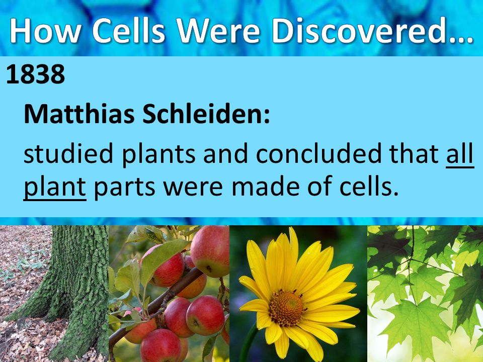 How Cells Were Discovered…