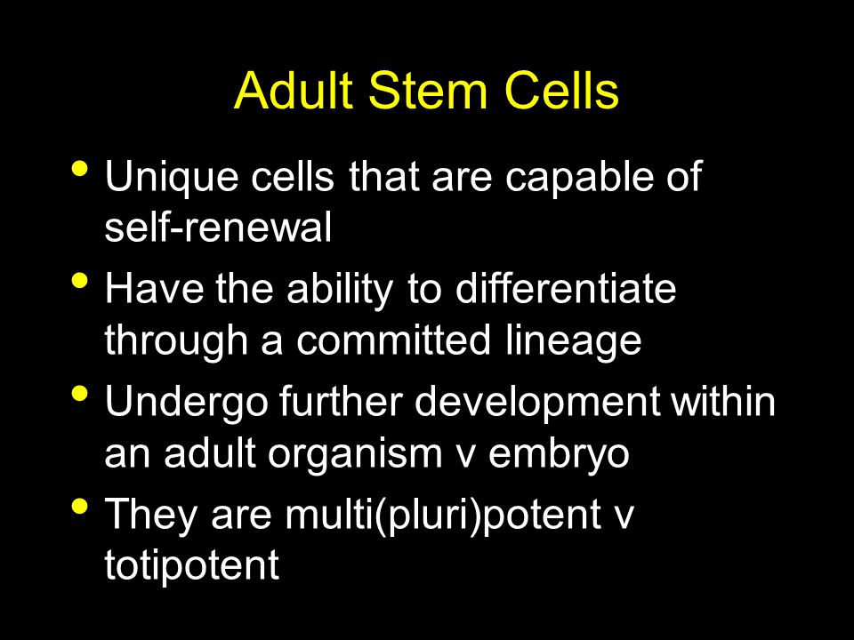 Adult Stem Cells Unique cells that are capable of self-renewal
