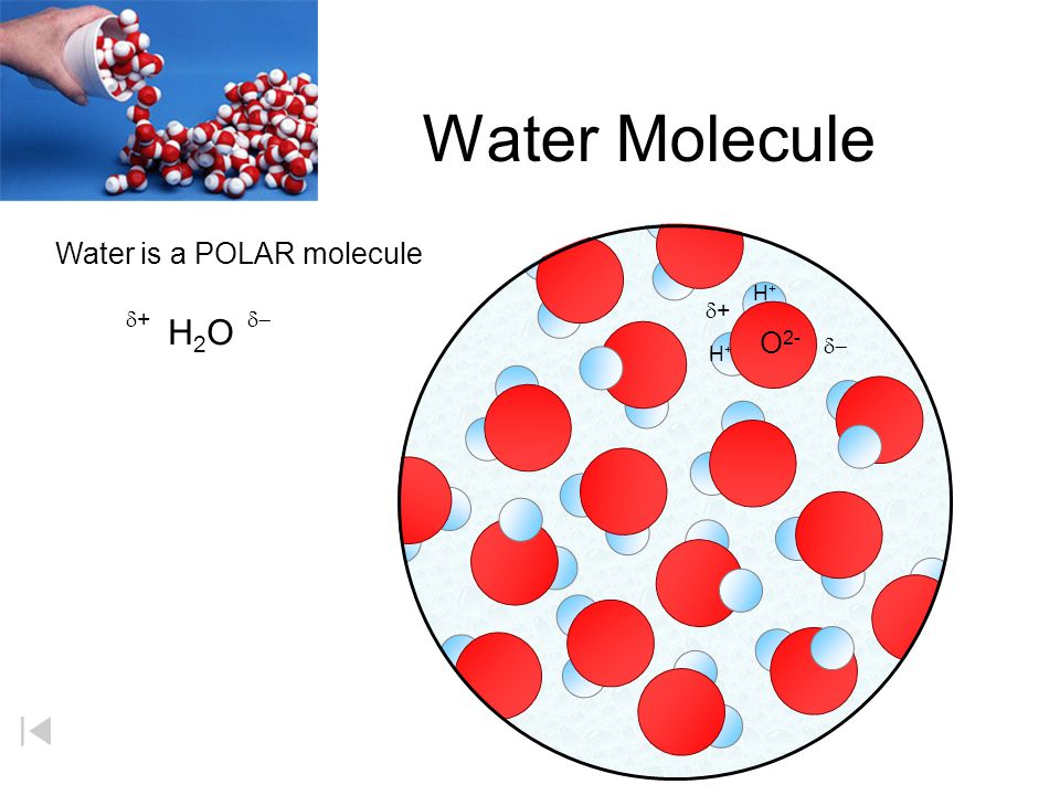Water Molecule H2O d+ d+ d- d- Water is a POLAR molecule O2- H+ H+