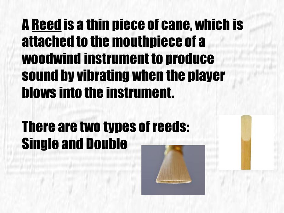 A Reed is a thin piece of cane, which is attached to the mouthpiece of a woodwind instrument to produce sound by vibrating when the player blows into the instrument.