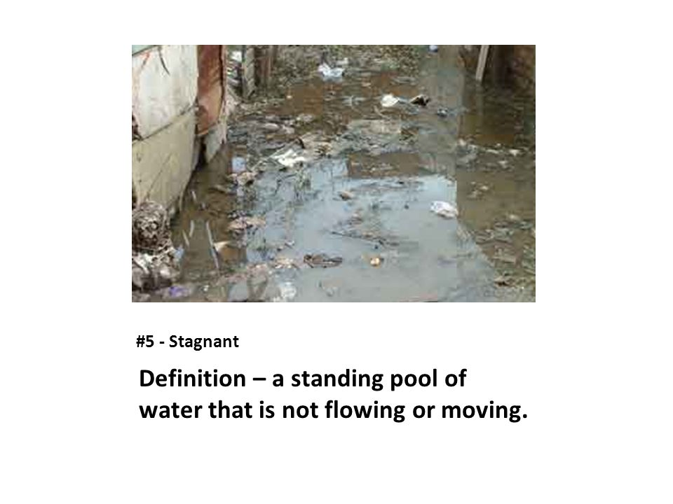 Definition – a standing pool of water that is not flowing or moving.