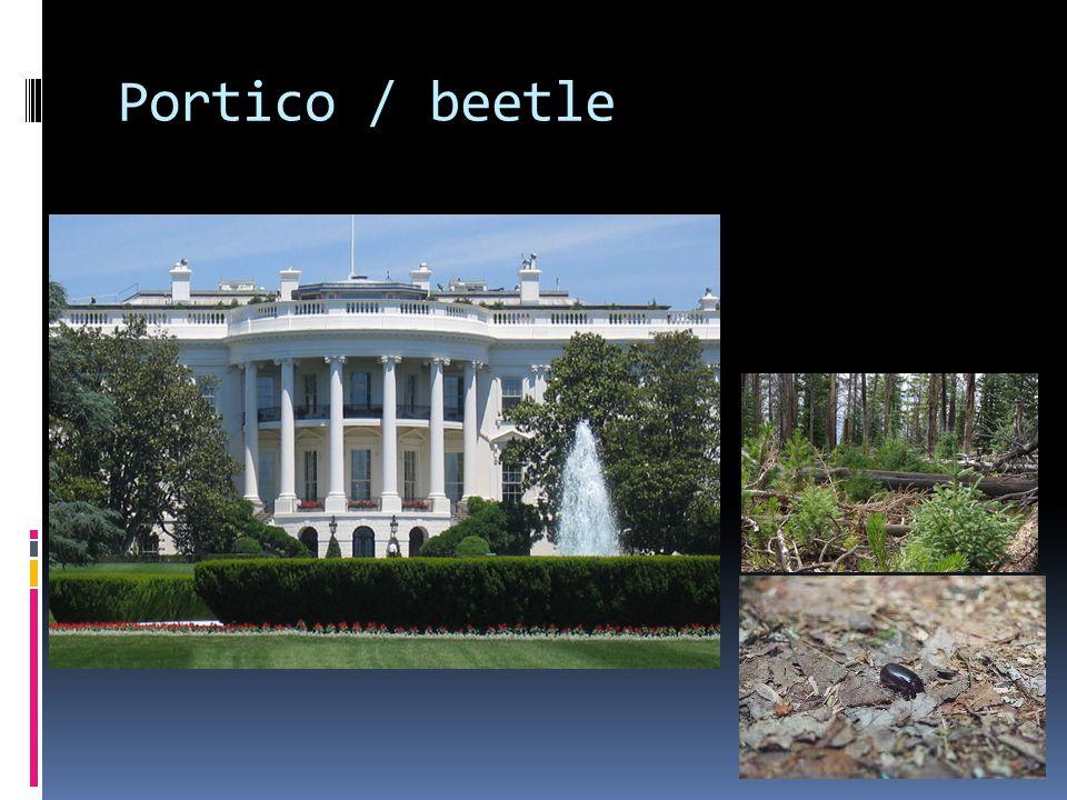 Portico / beetle