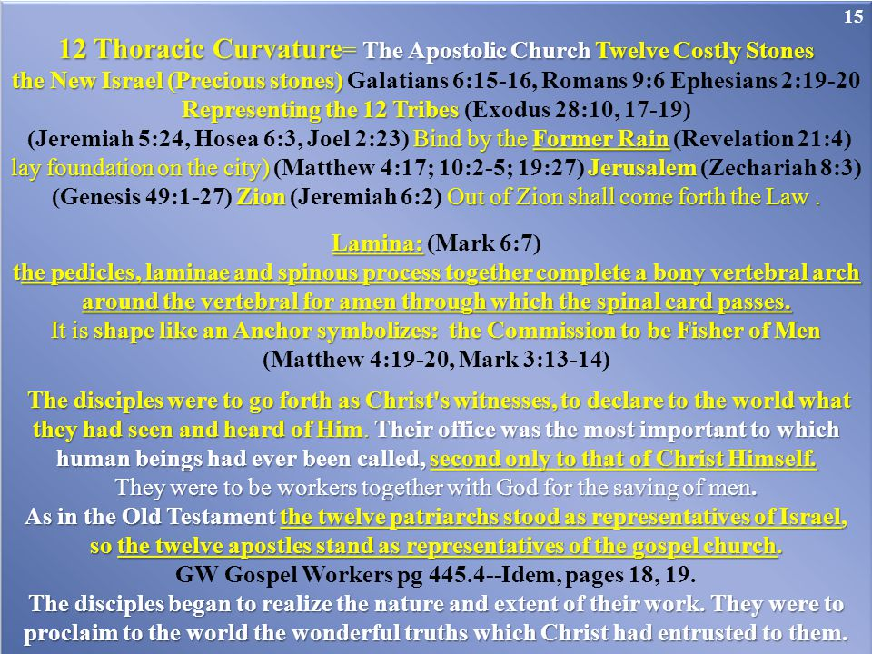 12 Thoracic Curvature= The Apostolic Church Twelve Costly Stones