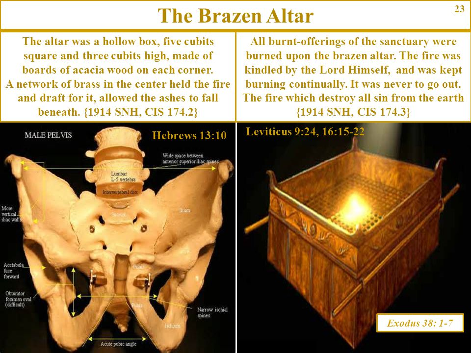 The Brazen Altar 23. The altar was a hollow box, five cubits square and three cubits high, made of boards of acacia wood on each corner.
