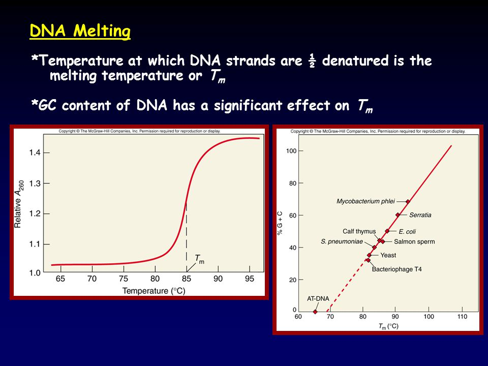 DNA Melting *Temperature at which DNA strands are ½ denatured is the melting temperature or Tm.