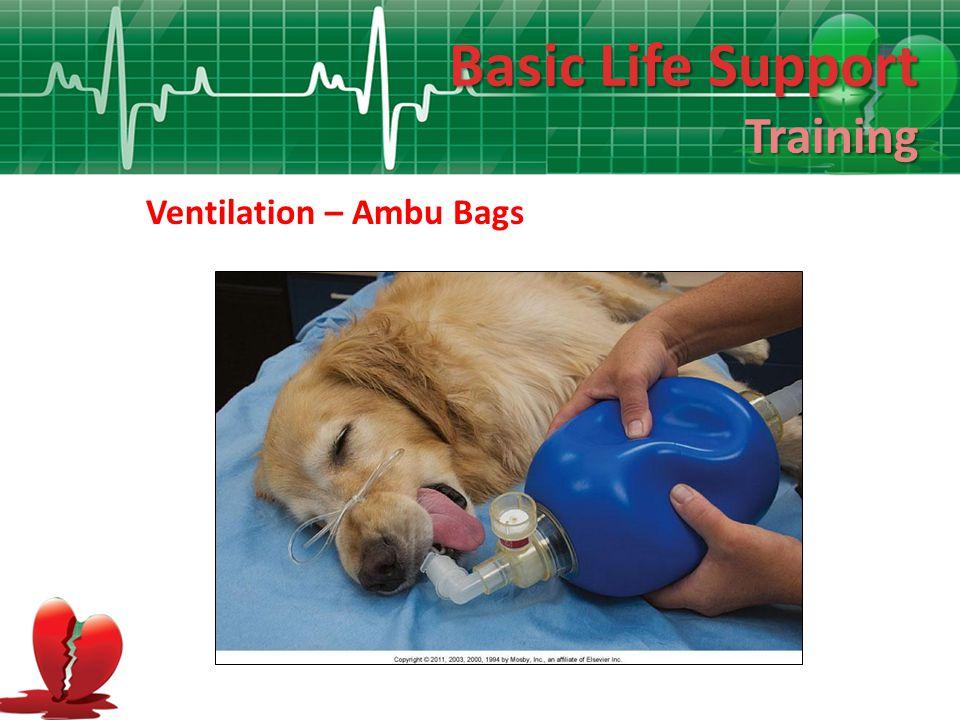 Basic Life Support Training Ventilation – Ambu Bags