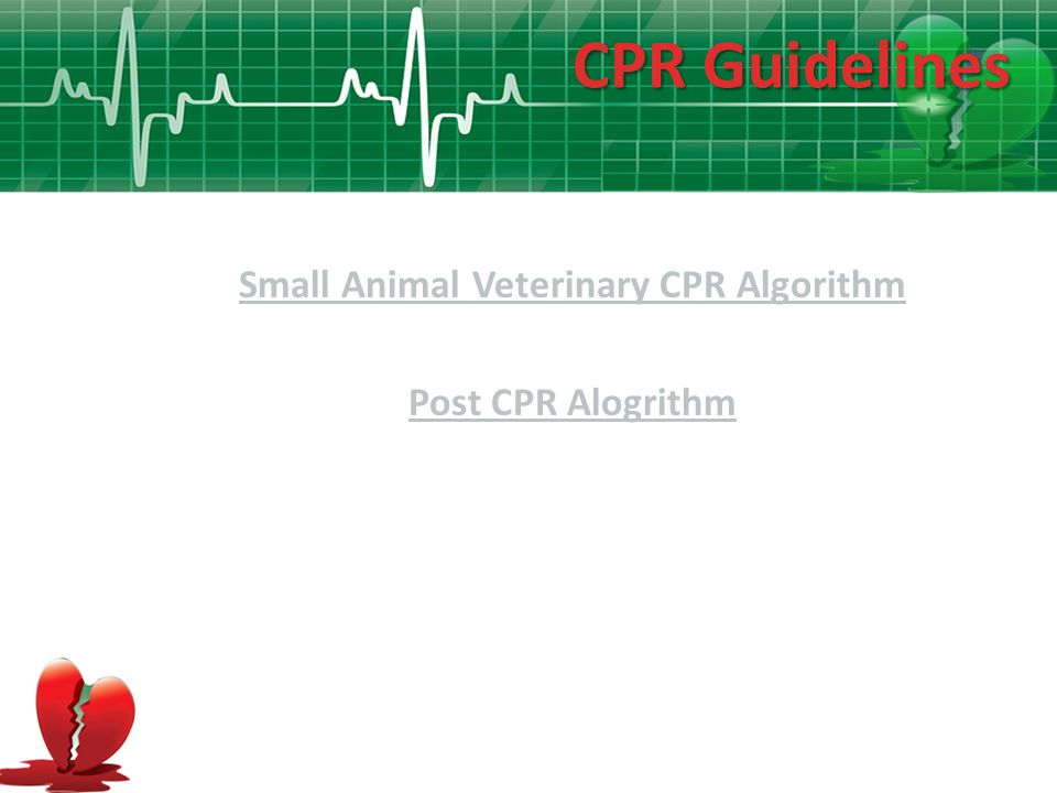 Small Animal Veterinary CPR Algorithm