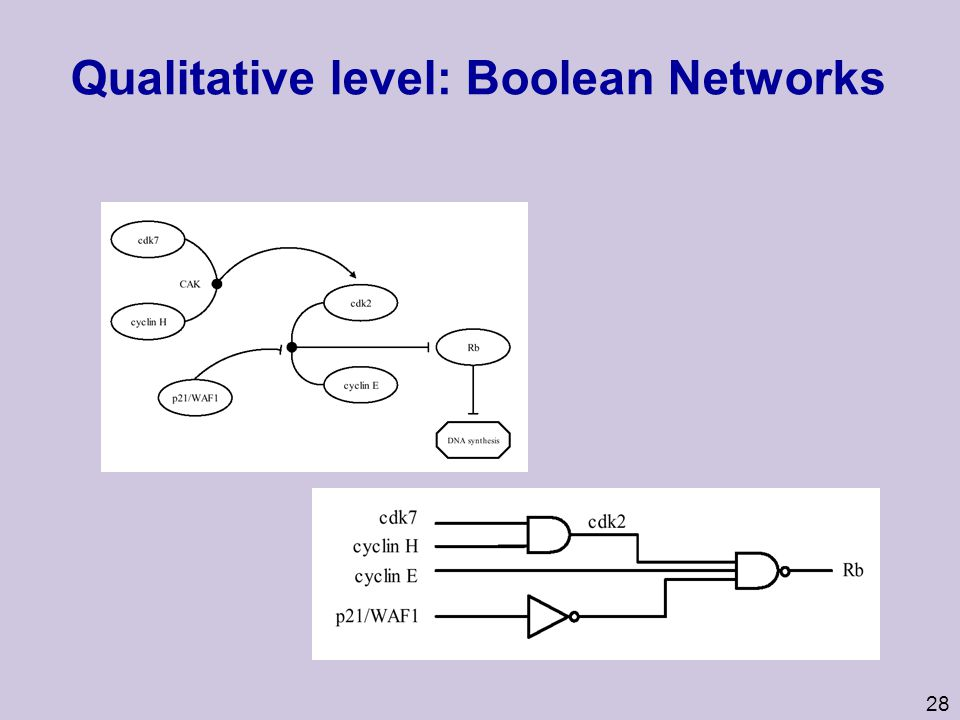 Qualitative level: Boolean Networks