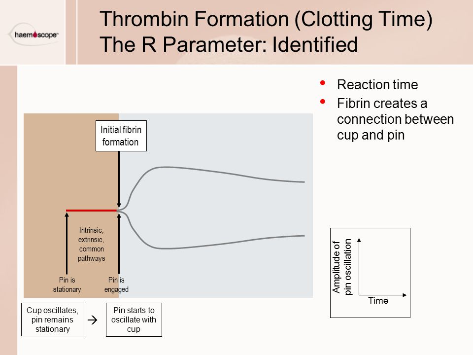 Thrombin Formation (Clotting Time) The R Parameter: Identified